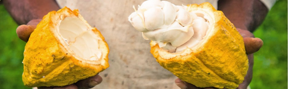 Stimulating a Renewed Interest in Cocoa FarmingBy improved technology; technical assistance education and training enabling effective participation in a deregulated cocoa industry