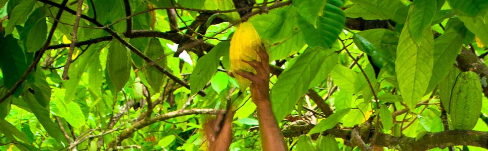 EmpowermentThe JCFA has developed a plan to empower cocoa communities to participate in a deregulated cocoa industry
