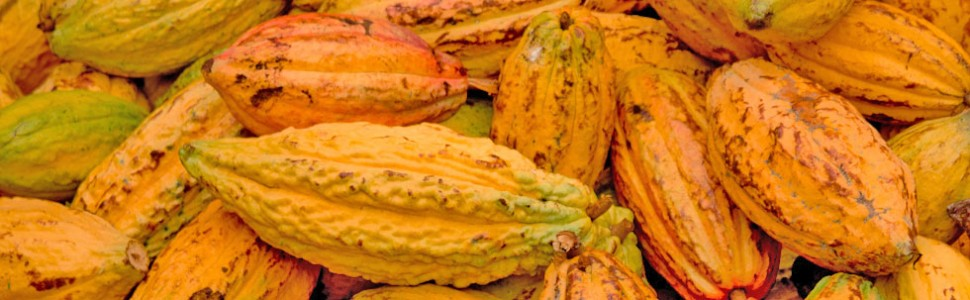 Communication and CooperationProviding all cocoa farmers and stakeholders with a forum to facilitate communication and to foster a spirit of cooperation